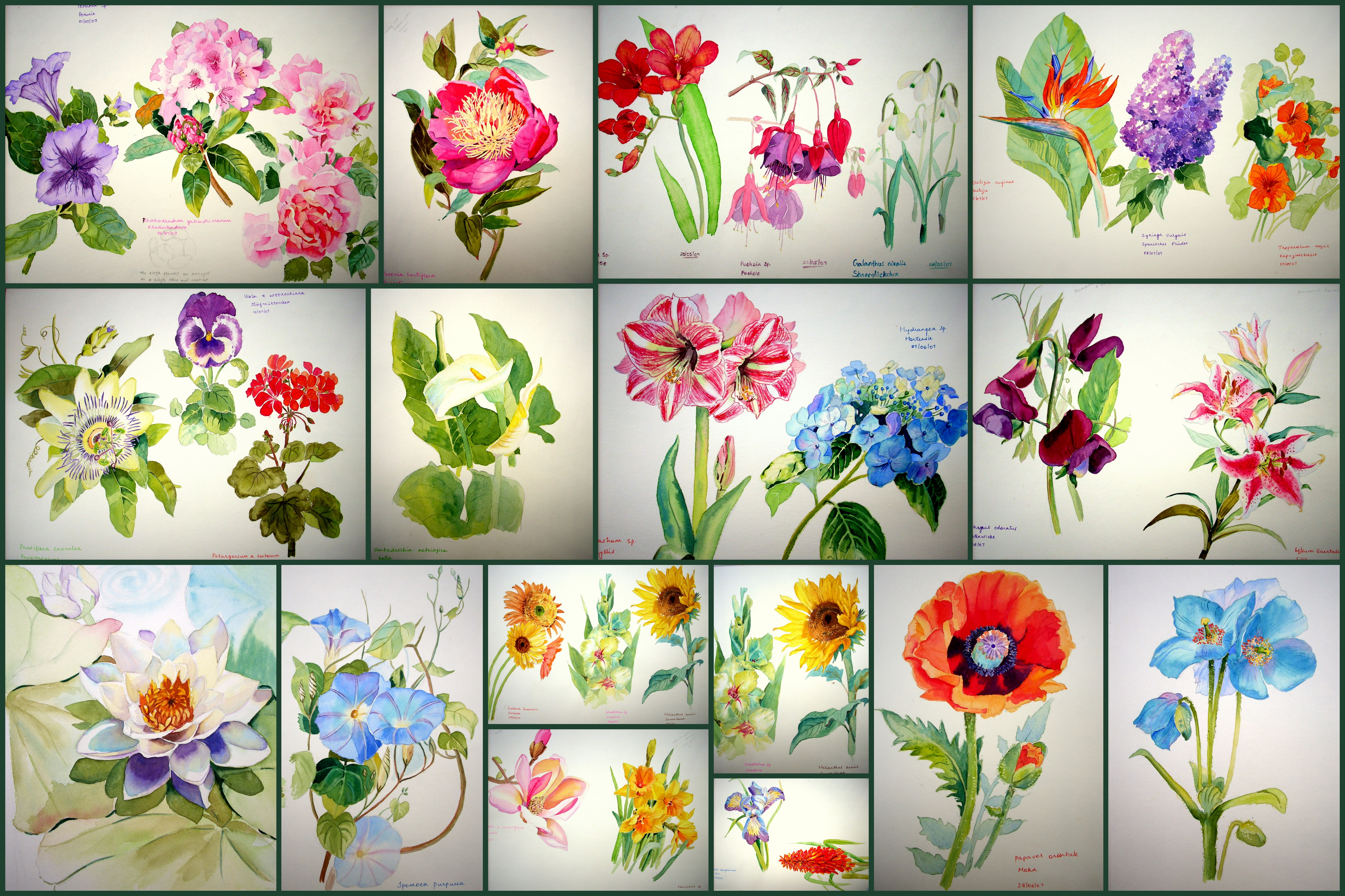Watercolor books for beginners - Easy Watercolor Flowers