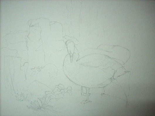 sketch-third in the swans