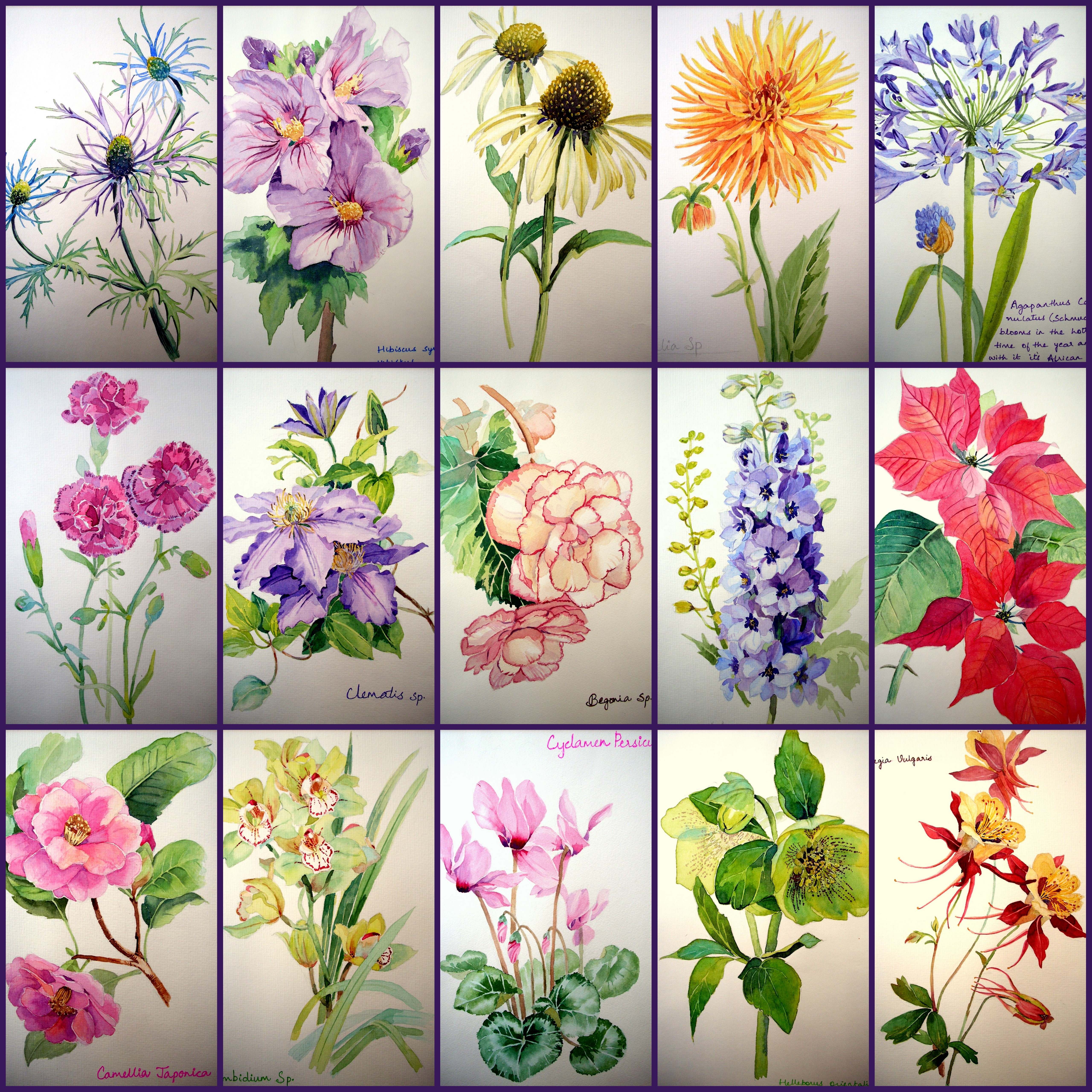 The Watercolor Flower Painter's A to Z by Adelene Fletcher