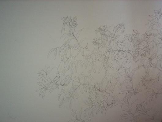 mango shoots drawing