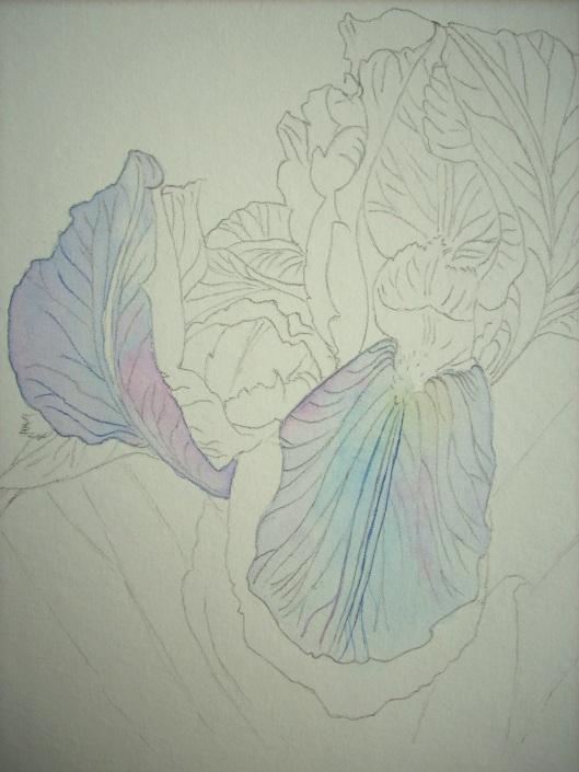 first washes-iris
