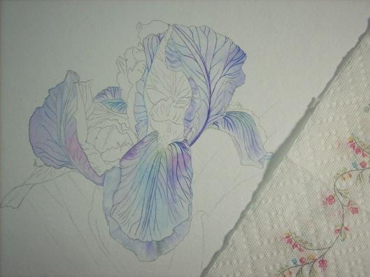 upper petals - iris