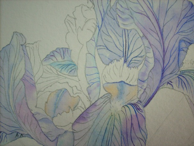 inner petals - iris