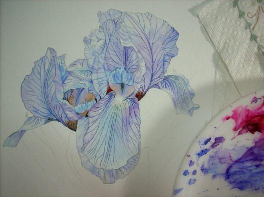 inner petals- deepened colors