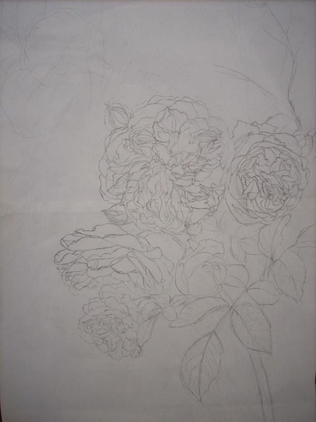 pilgrim roses