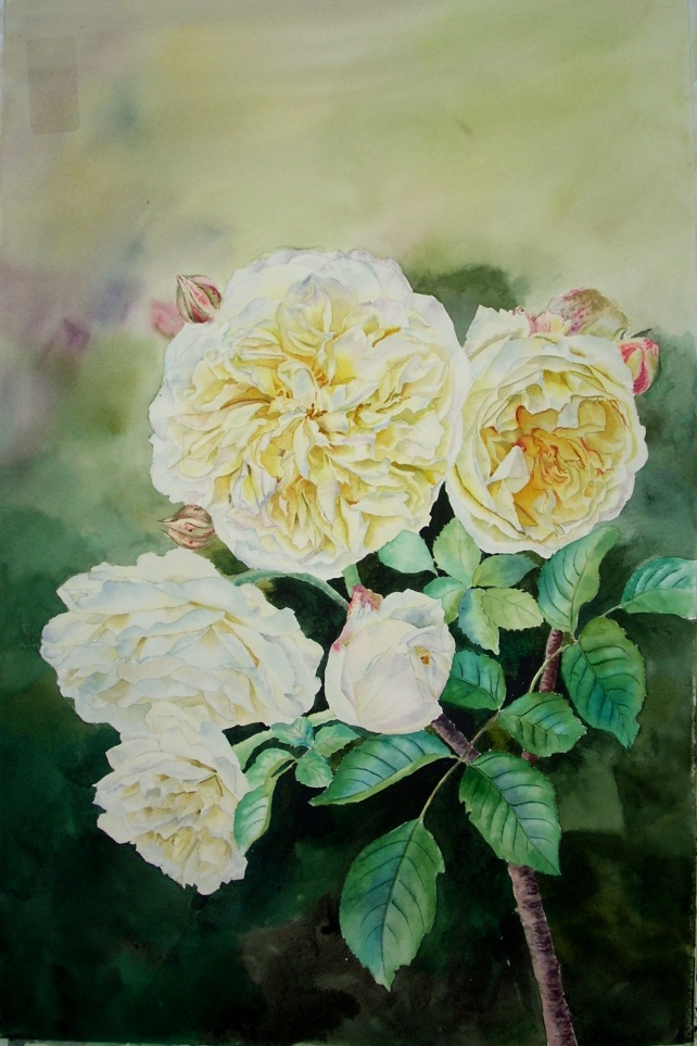 watercolor - pilgrim roses