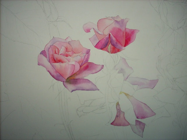 pink roses (a)