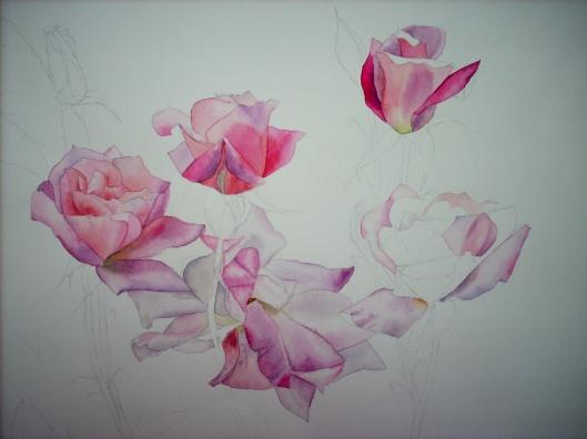 pink roses (b)