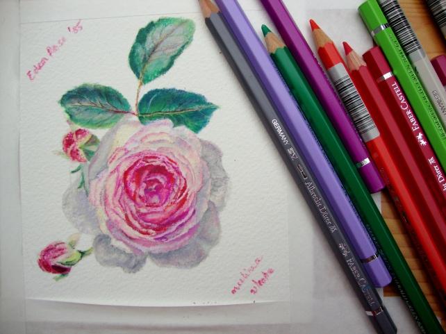 Eden Rose `85