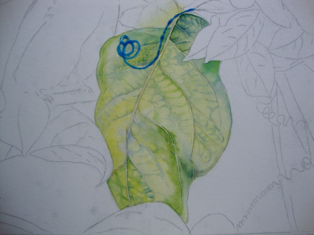 establishing the vein structure..
