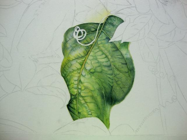 Leaf in watercolor