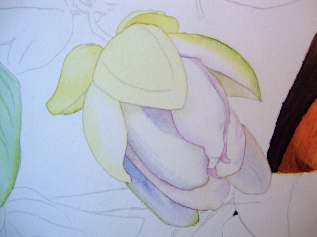 second layers for the bud