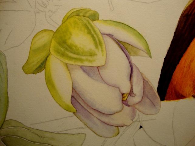 Passion Flower bud