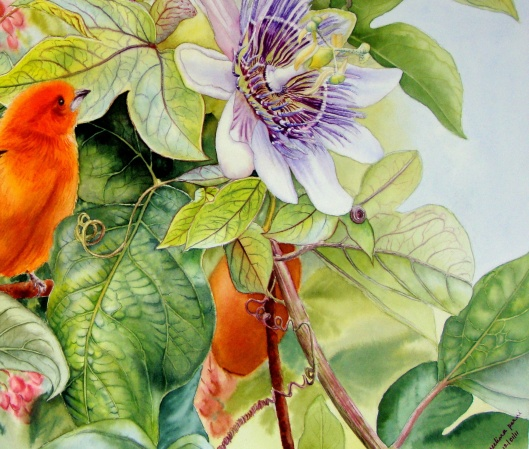 Passion Flower and Brazilian Tanager - crop 1