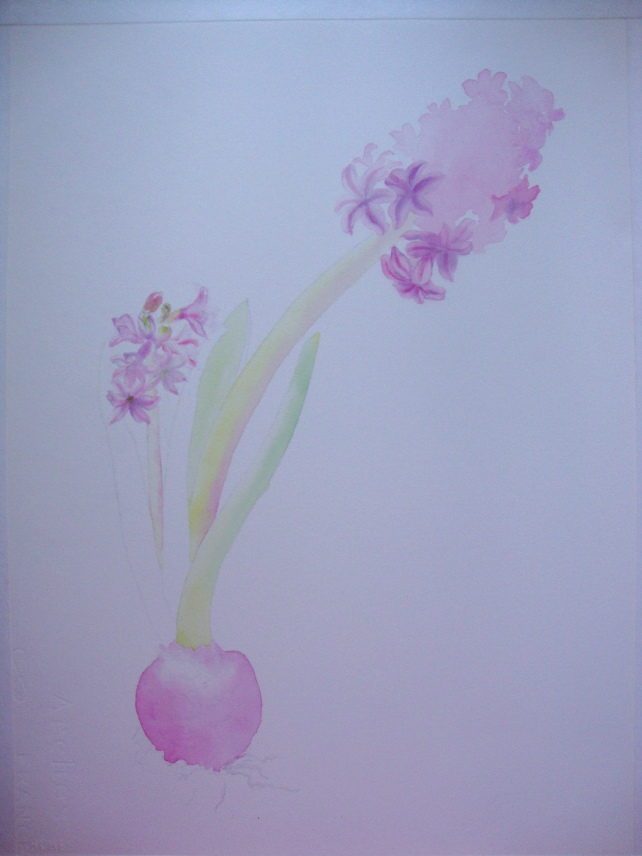 Hyacinthus orientalis - step 2
