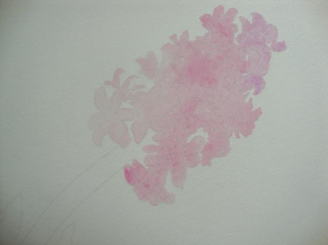 hyacinth -step 1