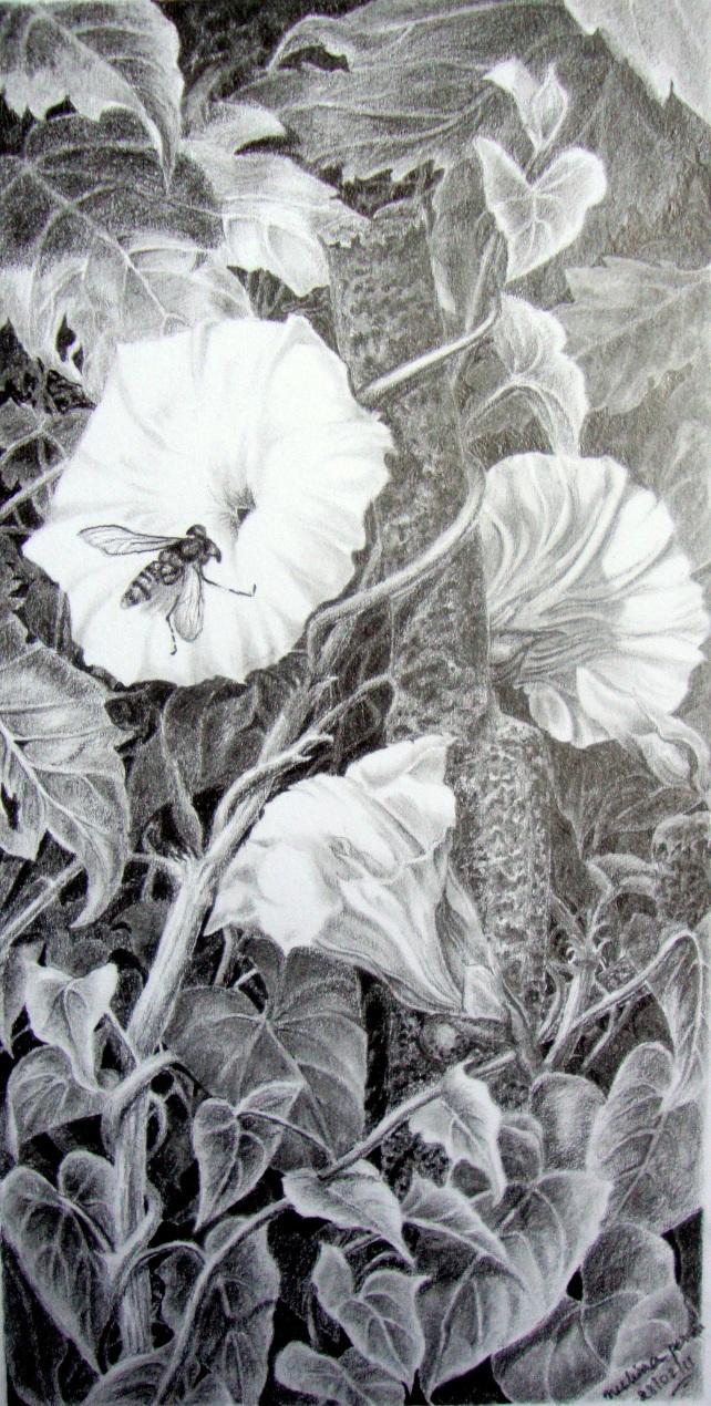 Hoverfly on Bindweed