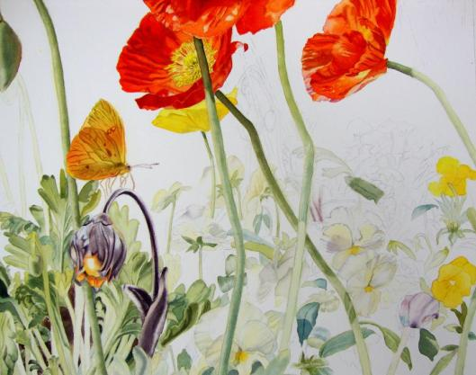 pansy and poppy leaves