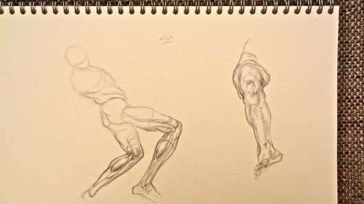 Leg Muscles (Glenn Vilppu)