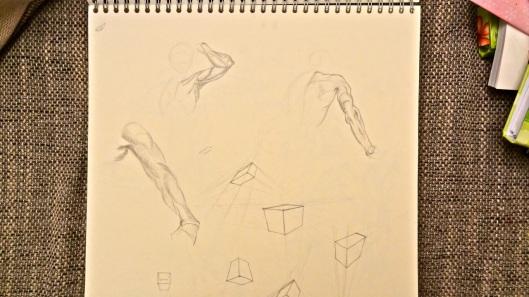 Arm studies (Glenn Vilppu)