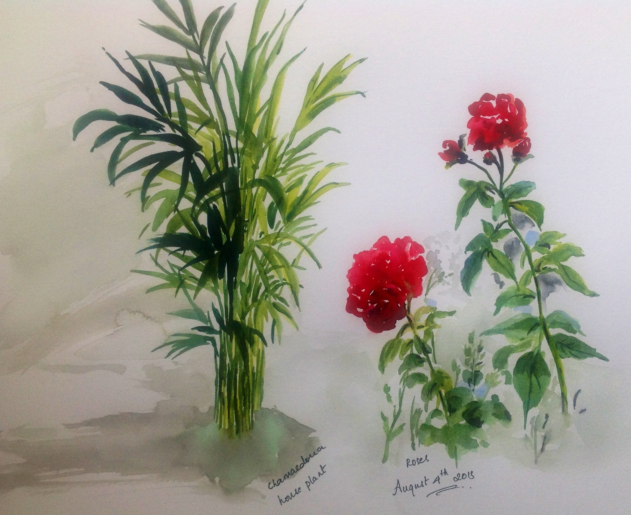 Chamaedorea indoor plant and rose watercolor sketches
