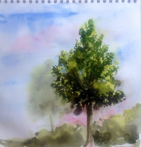 Maple tree watercolor sketch
