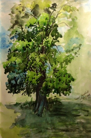Sketch of a Horse chestnut tree