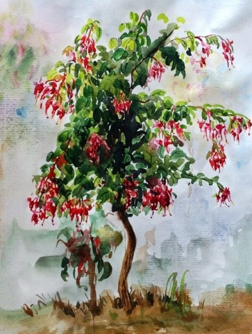 Watercolor sketch of a Fuchsia plant
