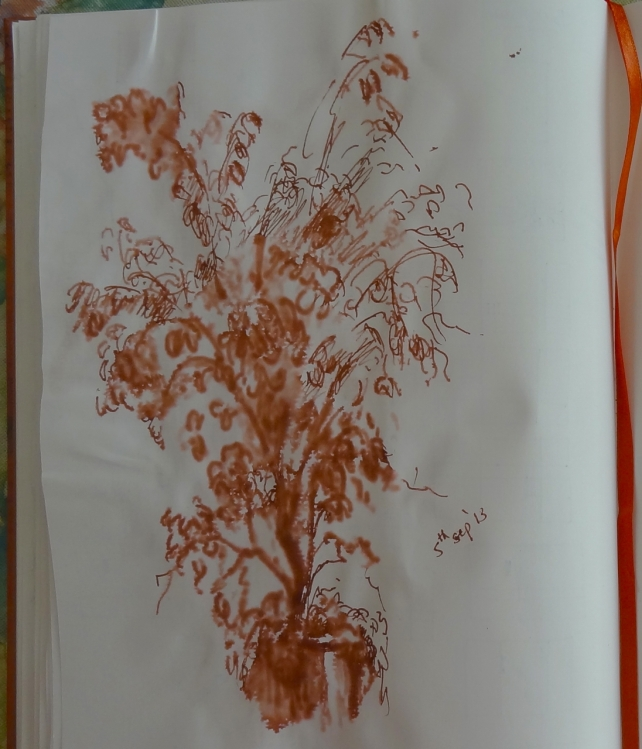 Ficus plant sketch