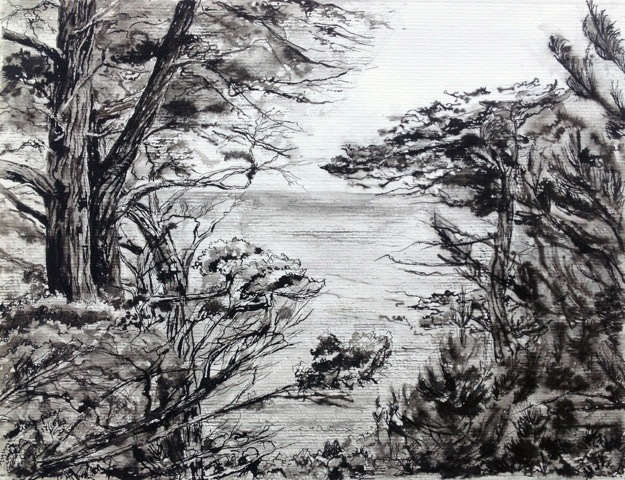 Scraggly pines on rocky coast