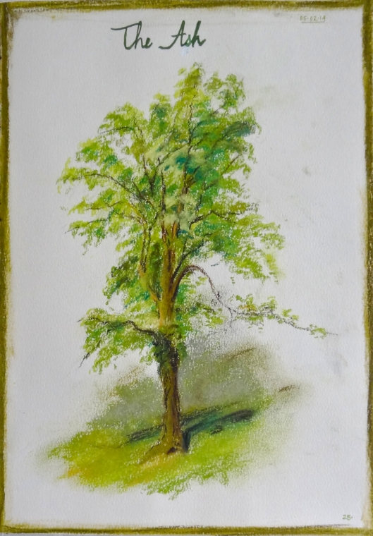 sketchbook page ash tree