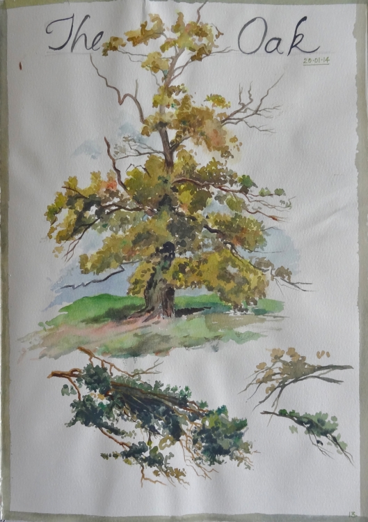 Oak watercolor sketch