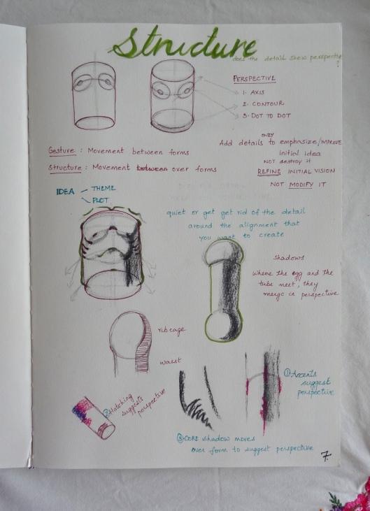 torso structure