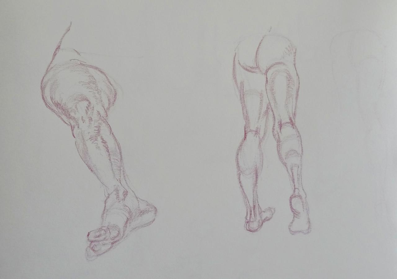 Anatomy studies from Vilppu   Watercolor Journal