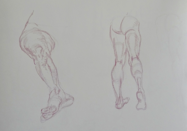 Leg studies from Vilppu