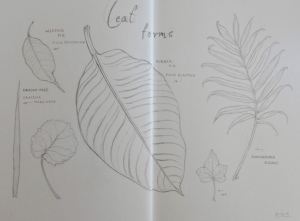 Leaf forms of common houseplants
