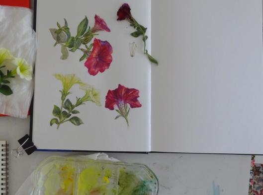 Petunia sketchbook page