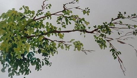 gouche foliage study