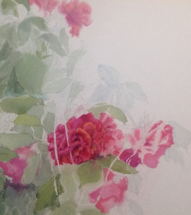 Red roses WIP in watercolor