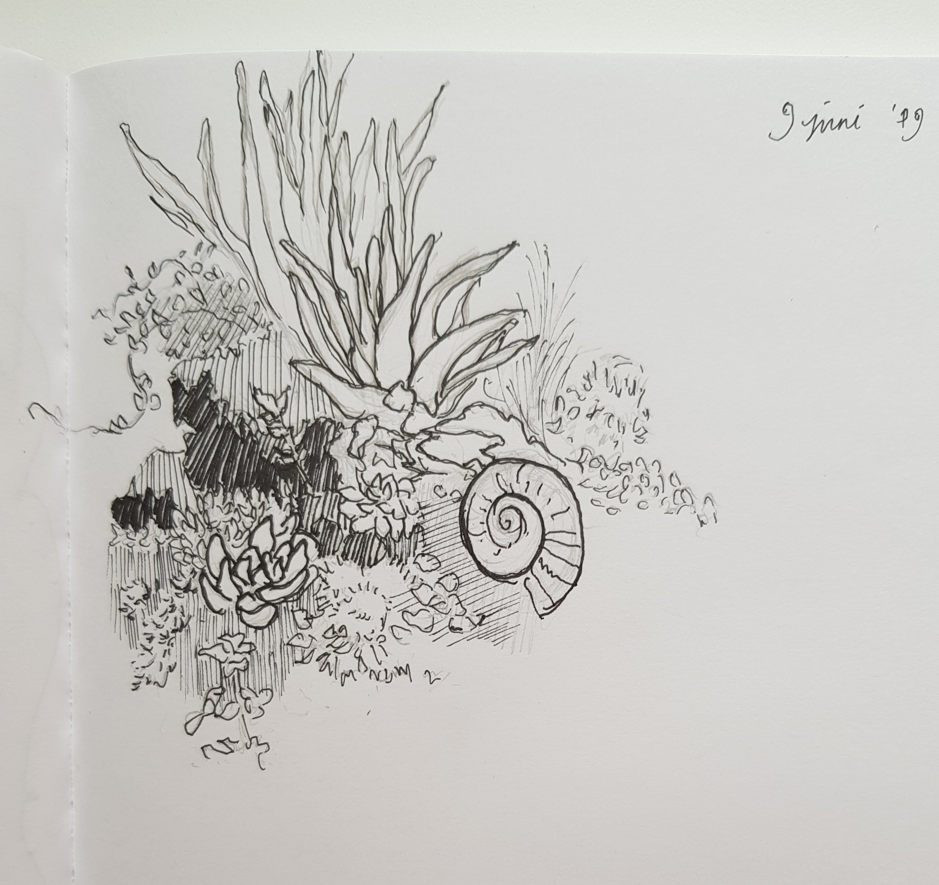 Plants sketches