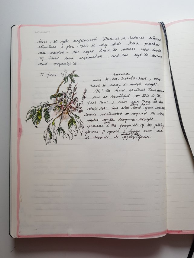 Horse chestnut tree sketch